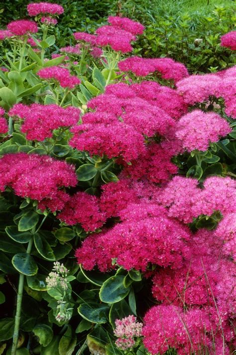171 best images about plants on pinterest gardens perennials and plants that repel mosquitoes