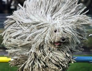 Tibet Rug I M Lovin This Rasta Inspired Komondor Dog Mon