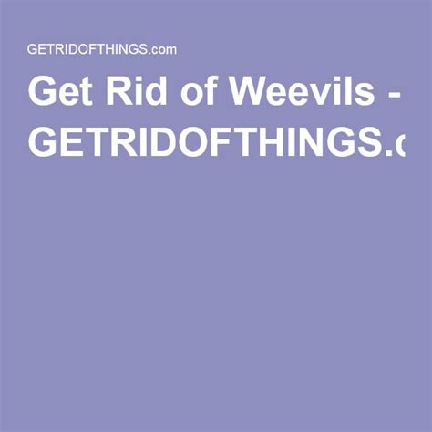 how to get rid of weevils in my bedroom how to get rid of weevils in the pantry 28 images