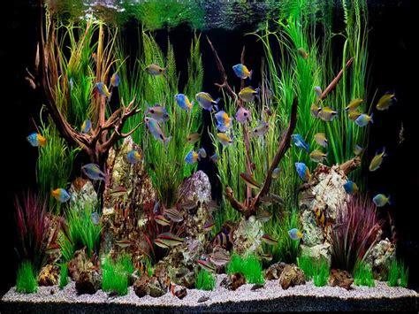 Tropical Aquarium Decorations by Id 233 E D 233 Coration Aquarium Tropical