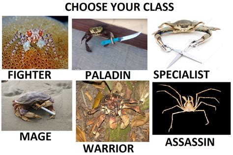 Crab Scissors Meme - crab themed rpg choose your class know your meme