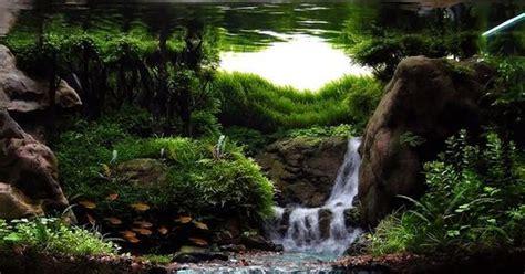 membuat water fall aquascape 10 aquascape waterfall yang unik dan menawan dunia akuarium