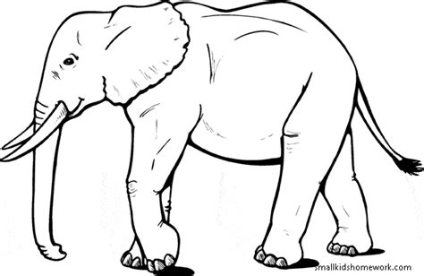 elephant outline coloring pages elephant outline picture