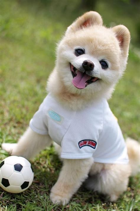 soccer for dogs soccer so football animals world cup soccer and world