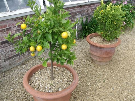 Fruit Trees In Planters fruit trees a planting guide for fruit trees in