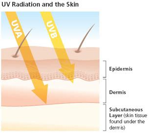 Do Uv Ls Cause Cancer by Ultraviolet A Uva And Ultraviolet B Uvb Ultraviolet