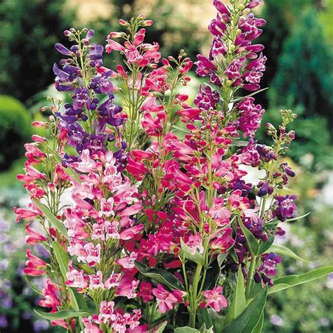 perennial foliage plants perennial plants to cut back or prune in the fall