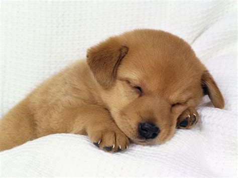 best puppy for baby best wallpapers dogs wallpapers