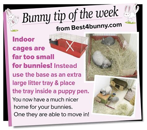 Must For The Week The House Bunny by 127 Best Images About Bunny Madness On Rabbit