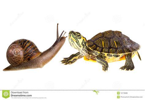 imagenes de libres y tortugas amor anfibio de la tortuga y del caracol imagen de archivo