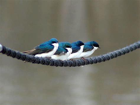 blue bird desktop wallpaper  wallpapersafari