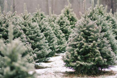 shopper s diary a christmas tree farm in maine