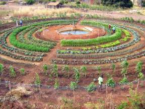 comment d 233 marrer un potager en permaculture inform