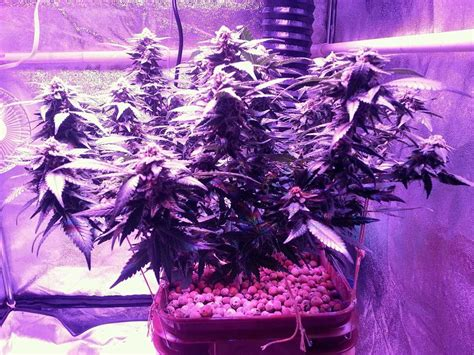 types of grow lights which led grow lights are best for growing cannabis