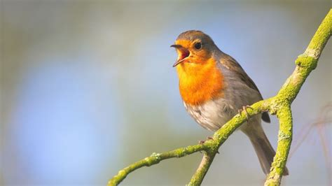 birds pictures shazam for birds three apps that recognize bird calls