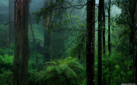 wallpaper 4k forest forest desktop wallpapers 4k ultra hd
