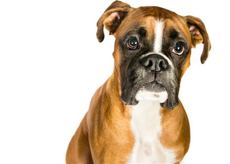 grooming courses sniffin around qc pet studies