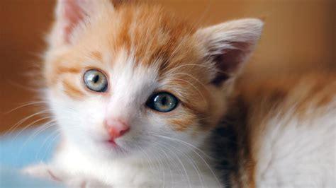 top  cute baby cat kitten cute baby kittens