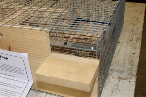 deluxe repeating sparrow starling trap usa amish