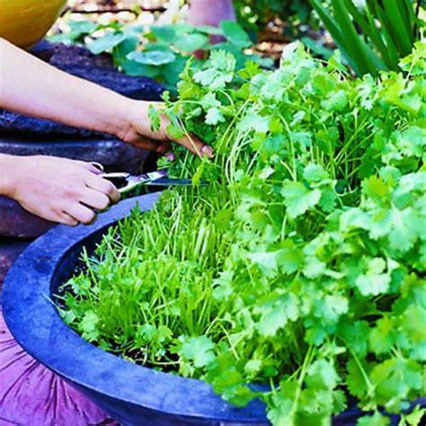 creare un orto in giardino farmaker srls come creare un orto urbano in giardino