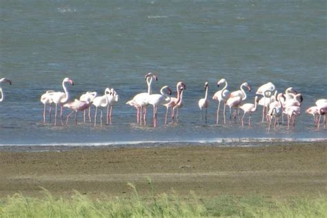 barberspan bird sanctuary southern region south africa
