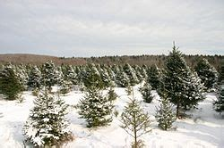 christmas tree farm near me appleron wi juletre