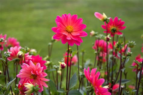 images of beautiful flowers 50 most beautiful flower pictures and photos