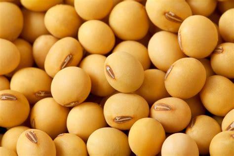 Soya Bean 1 soya bean mrt