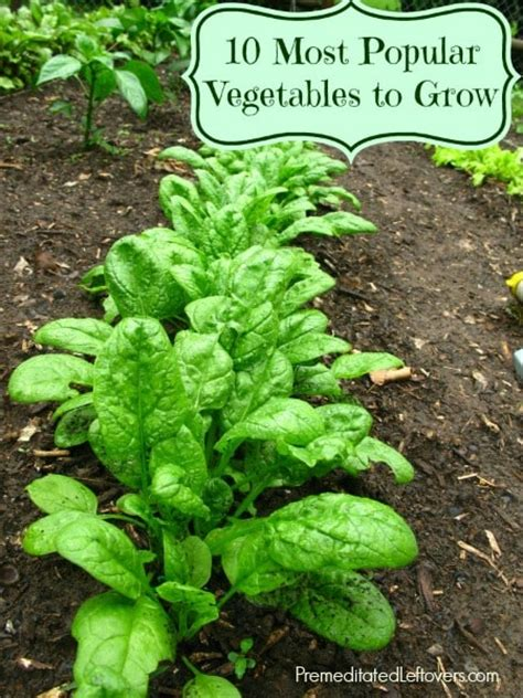popular garden vegetables 10 most popular vegetables to grow in a garden