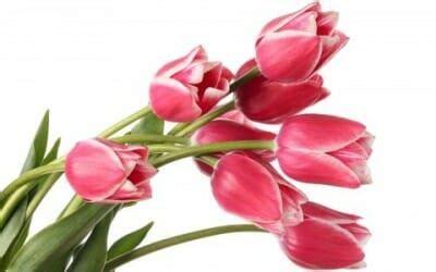 il significato dei colori dei fiori significato dei fiori un fiore per ogni emozione tuttogreen