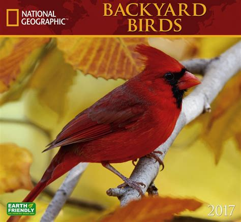 2017 backyard birds national geographic wall calendar