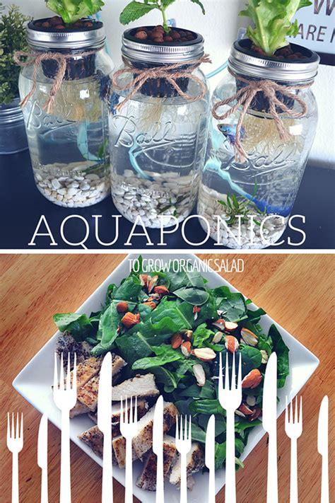 organic salad   mason jar aquaponics  green
