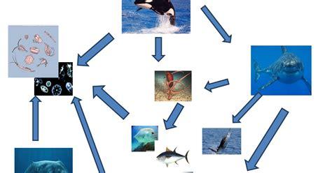 cadenas troficas ecologia ecologia red tr 243 fica