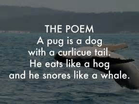 poems about pugs a pug is a by gabby lacourse