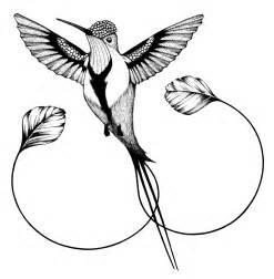 hummingbird drawing hummingbird drawings clipart best