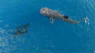 blue fish beach waves ocean sea whale not mine repost diving tropical