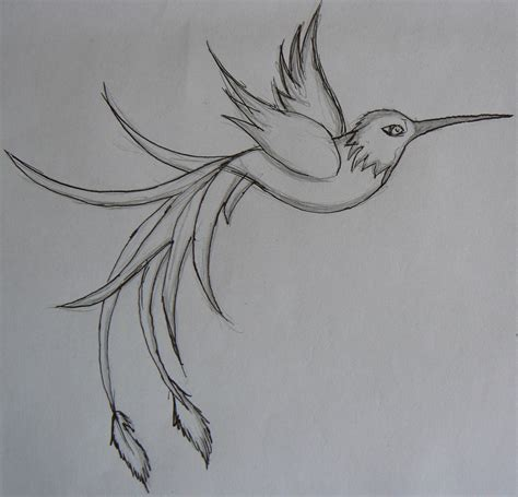 hummingbird tattoo designs free the gallery for gt hummingbird sketches