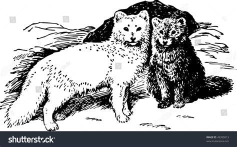 arctic fox wikipedia the free encyclopedia arctic fox wikipedia the free encyclopedia arctic fox