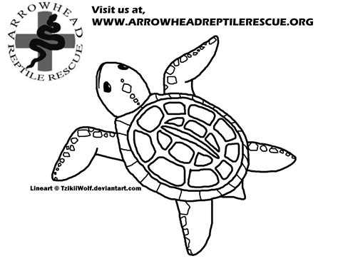 coloring pages snapping turtle free coloring pages of snapping turtles