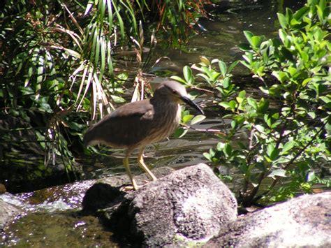 kiwi hd burung desktop wallpaper lebar definisi tinggi