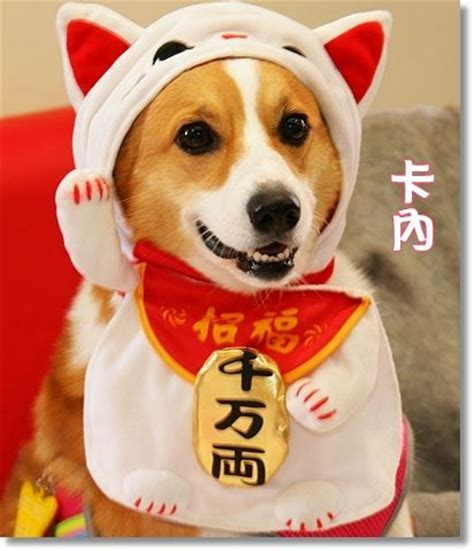 Costume Neko Cat the world s catalog of ideas