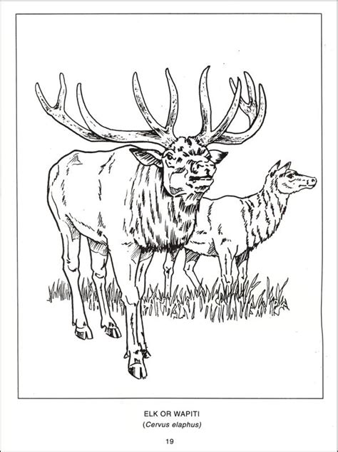 north american animals coloring page animals of north america coloring pages
