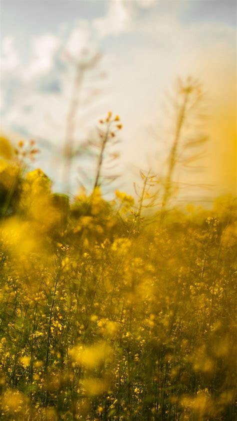 nature yellow flower bokeh spring happy iphone   wallpaper