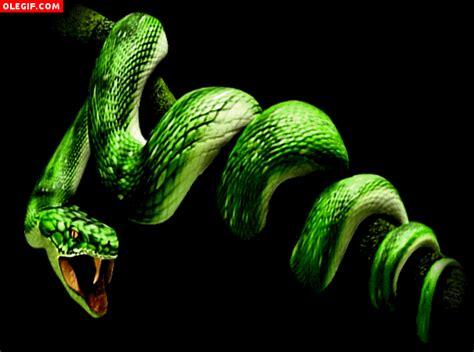 imagenes de serpientes oscuras gif serpiente agresiva gif 2