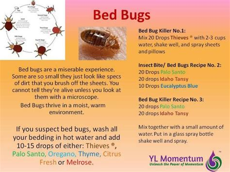 living with bed bugs bed bugs young living essential oils and living essential