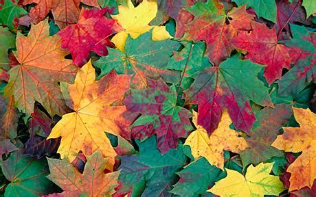 scientist discovers why leaves change colour in autumn