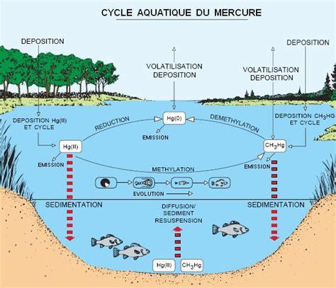 1359867961 l eau de mer milieu organique l eau les 233 cosyst 232 mes