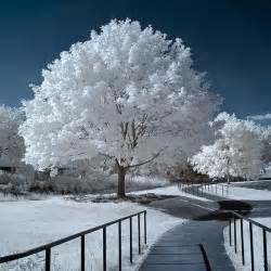 white tree winter snow path trees white nature