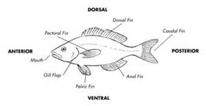 Fish Tips   Local Eating Massachusetts