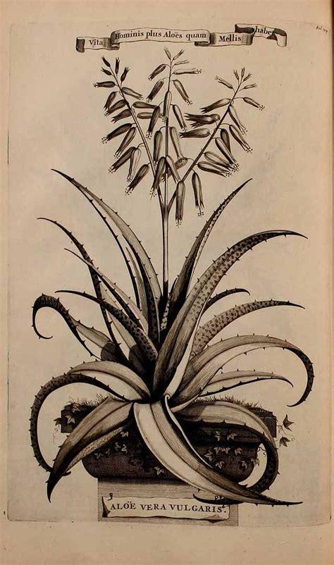 aloe vera on tattoo the 25 best aloe vera ideas on cactus